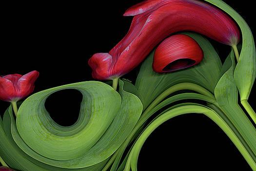 Tulip Express by Carel Schmidlkofer