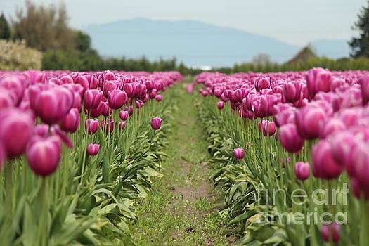 Tulip Garden by Eddie Hernandez