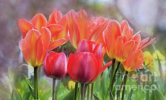 Tulip Time in Spring by Elaine Manley