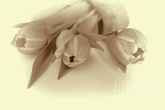 Tulips by Lynn Bolt