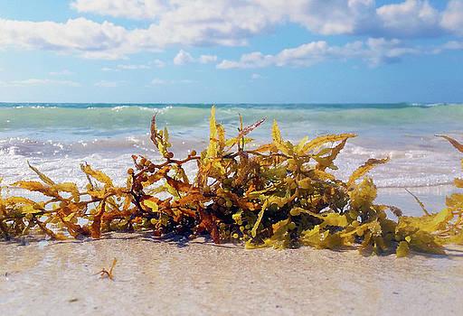 Tulum Seaweed by Jackson Ball