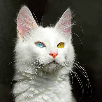 Daniel Hagerman - TURKISH ANGORA CAT