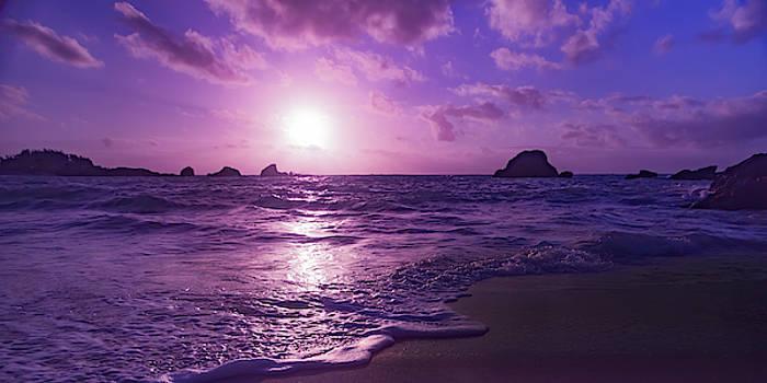 Turn Day into Night Bermuda by Betsy Knapp