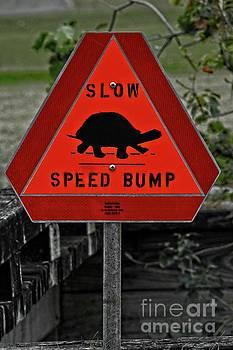 Turtle Speed Bump Sign by Ella Kaye Dickey