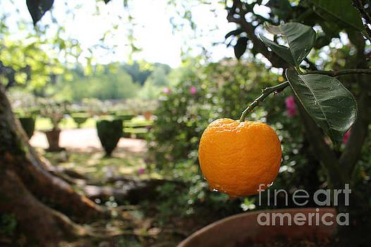 Tuscan Orange by Christine Buckley