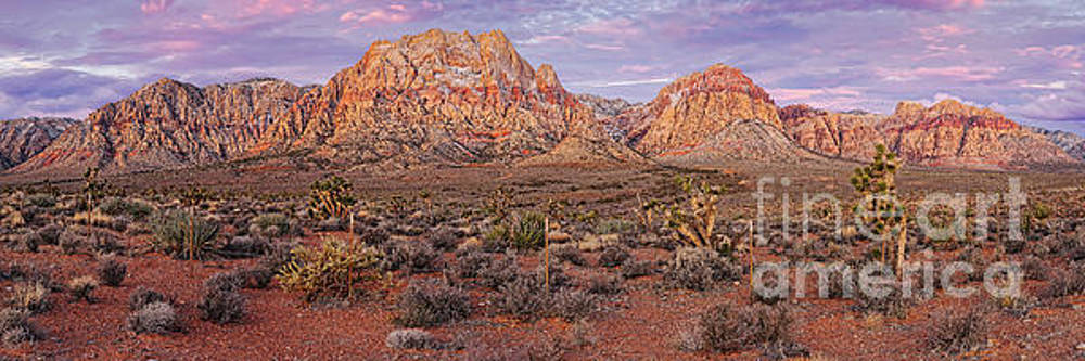 Twilight Panorama of Red Rock Canyon and Joshua Trees - Mojave Desert Las Vegas Nevada by Silvio Ligutti