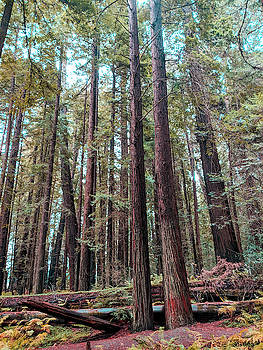 Twin Redwoods by Jera Sky