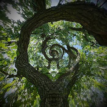 Twisted tree by Silvia Marcoschamer