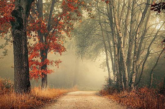 Twists of autumn by Rob Visser