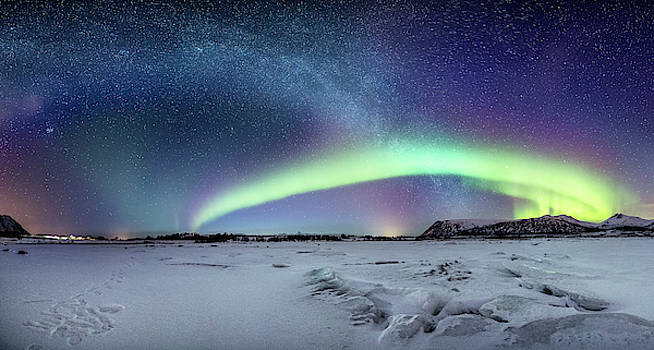 Two bows by Frank Olsen