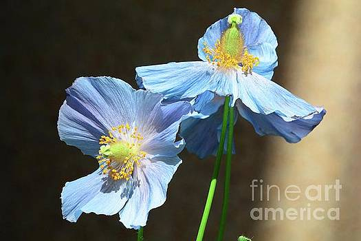 Two in Blue for You by Cindy Manero