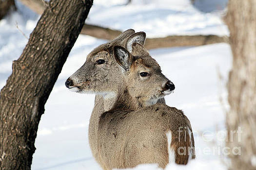 Two of a kind by Lori Tordsen