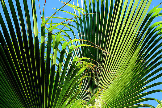 Two Palm Leaves by August Timmermans