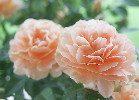 Two Peachy by Shirley Heier