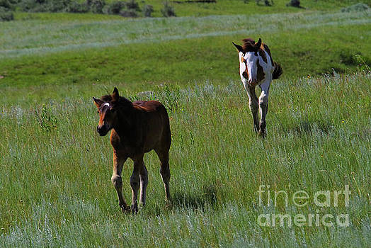 Two Summer Colts by Jeff Swan