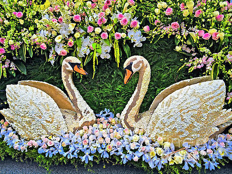 Two Swans 2017RP011 by Howard Stapleton
