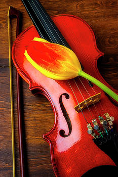 Two Tone Tulip And Violin by Garry Gay