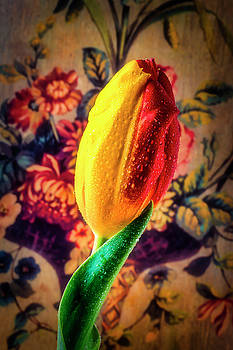 Two Tone Tulip by Garry Gay