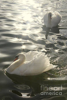 Two white swans by Irina Davis