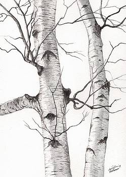Christopher Shellhammer - Two Wild Birch trees