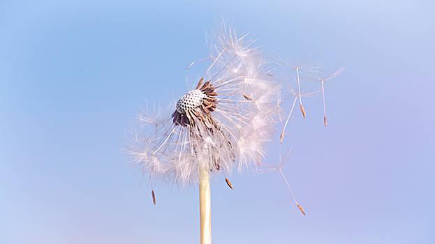 Under The Blue Sky by Jaroslav Buna