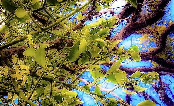 Under The Mistletoe by D Davila