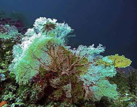 Susan Burger - Underwater Beauty
