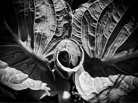 Unfurl by Scott Wyatt