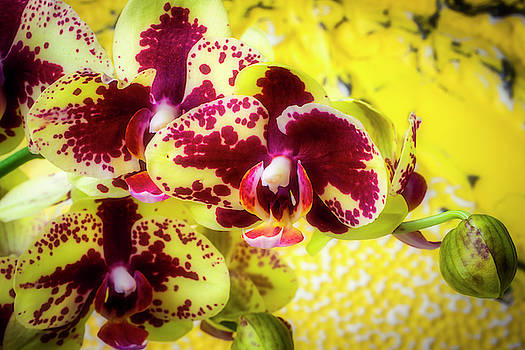 Unique And Beautiful Orchids by Garry Gay