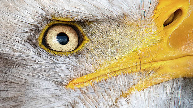 Up close and personal by Eyeshine Photography
