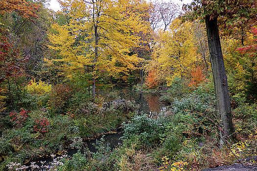 Urban Autumn Color by Cornelis Verwaal