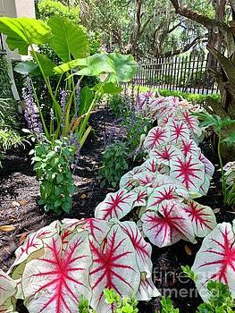 Urban Garden by Linda Covino