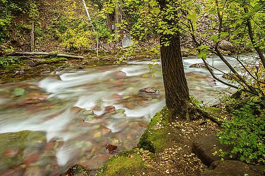 USA, Colorado Autumn On Castle Creek by Jaynes Gallery