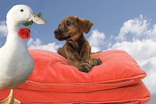 Valentine - Puppy Love by Nikki Attree