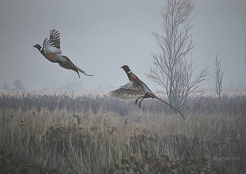 Valley Pheasants by Peter Mathios