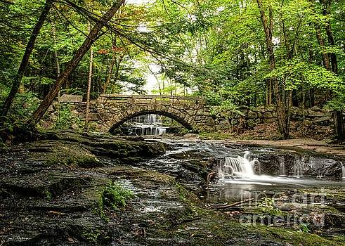 Vaughn Woods - Hallowell, Maine by Jan Mulherin
