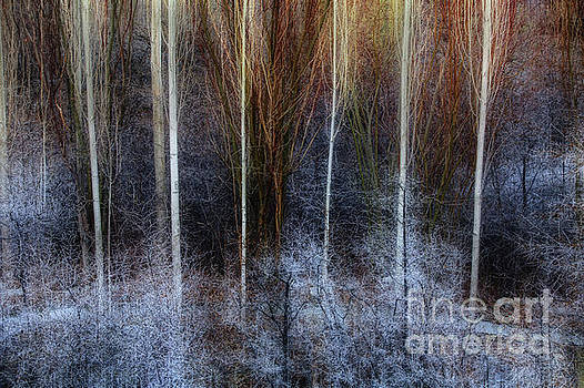 Veins of Forest by Awais Yaqub