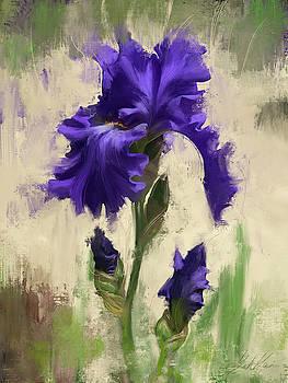 Velvet Beauty by Garth Glazier