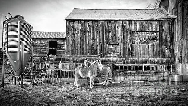 Vermont Barn and Horses Sugarbush Farm by Edward Fielding