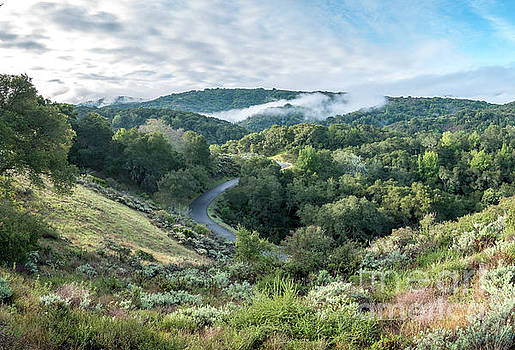 View of Curved Road Through Dense Forest Area with Low Clouds ov by PorqueNo Studios
