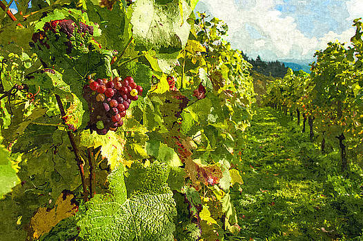Vineyard Grapevine Walk by Sandi OReilly