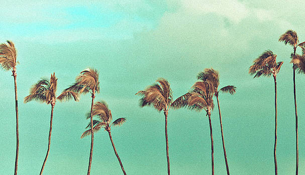 Vintage Baldwin Palms by Angelina Hills