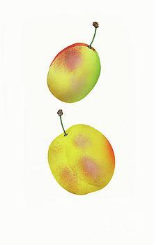 Nikki Vig - Vintage Peaches Fruit Art