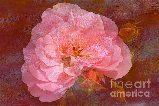 Vintage Pink And Textured Rose by Joy Watson