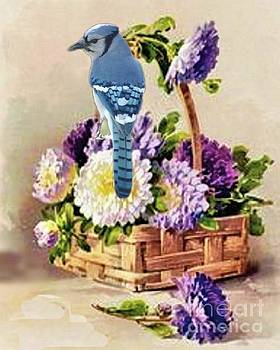 Vintage Postcard with Bluejay by Janette Boyd