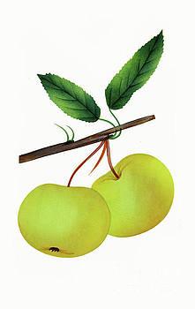 Nikki Vig - Vintage Yellow Apple Fruit Art