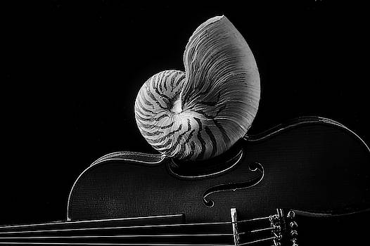 Violin And Nautilus Shell In Black And White by Garry Gay