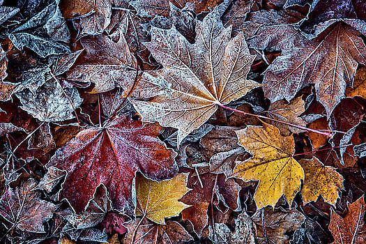 Visions Of Fall by Wes and Dotty Weber