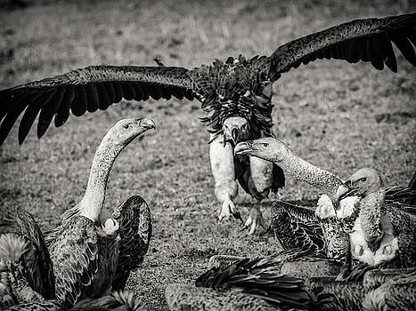 Vultures by Robin Zygelman