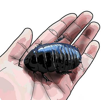 W is for Wood Cockroach by Joan Stratton